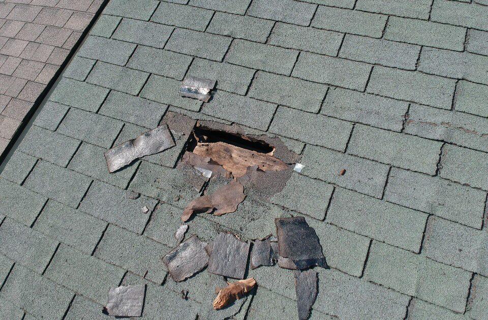Image of raccoon damage to roof shingles