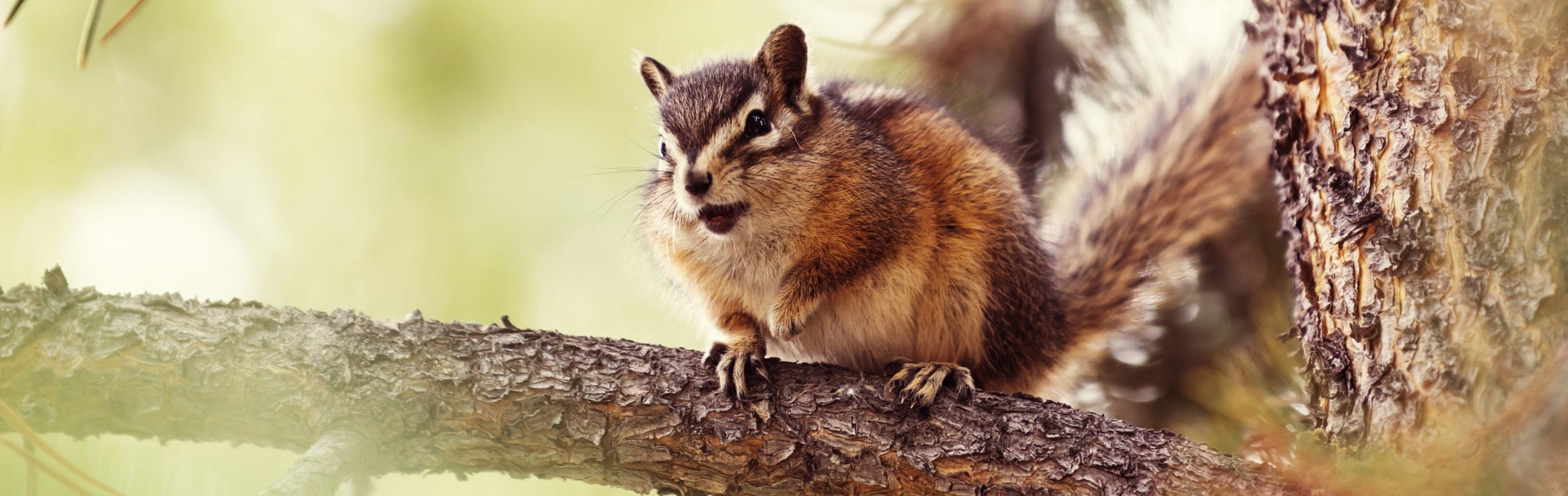 Image of chipmunk in Michigan forest