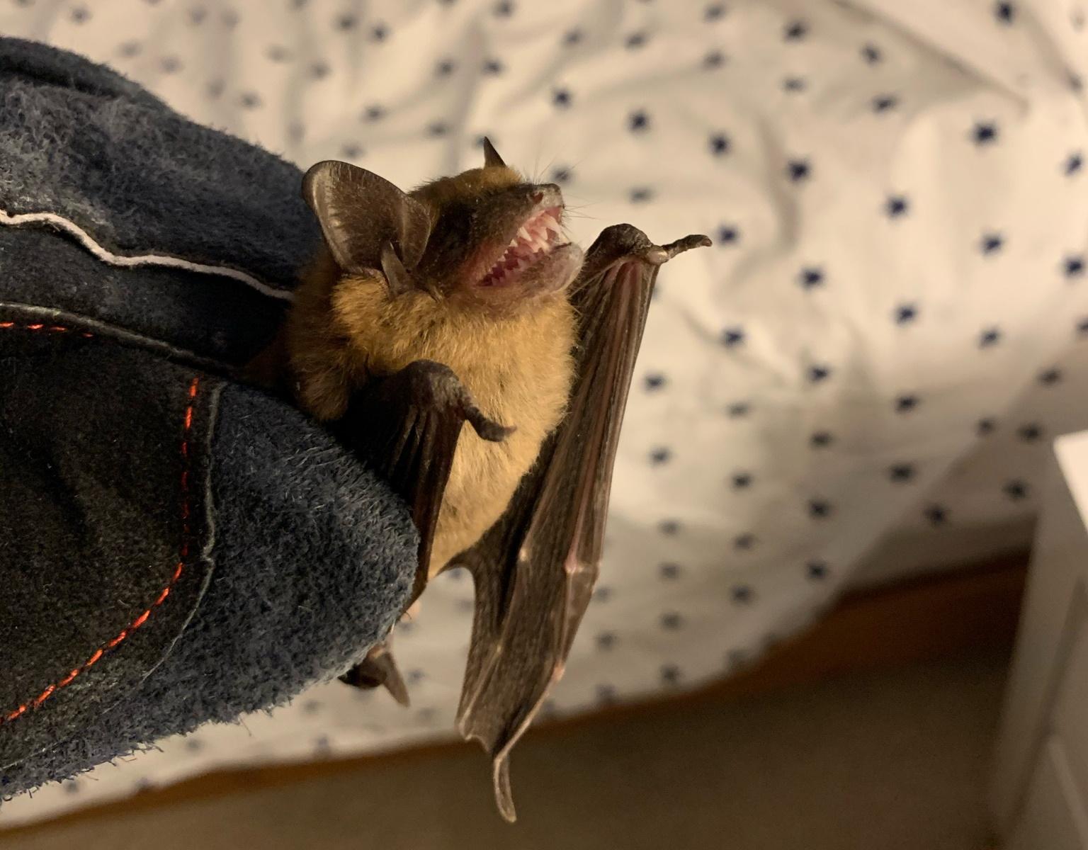 image of bat control companies Grand Rapids MI