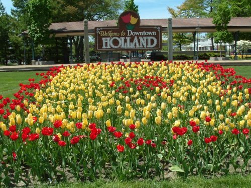 Image of Holland Michigan's famous tulips